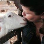 Love that goat :)