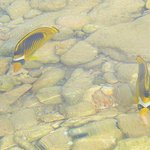 рыбки у отеля
