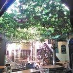 Das traumhafte Blätterdach