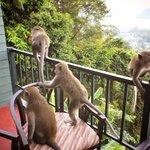 гости из джунглей)