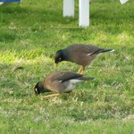 birds on hotel ground