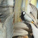 bird on hotel grounds