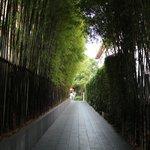 Bamboo walk way