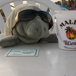 Manatee from the gift shop