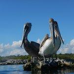 birds of yal-ku lagoon
