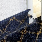 shoddy carpet installation