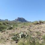 desert near Panther Junction Visitor Center