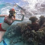 Bonaire Snorkeling with Sea Cow Snorkeling excursions