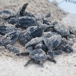 Newborn turtles
