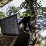Monkey checking email with me