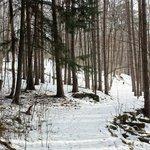 The snowy, windy trail through Hubbard Park