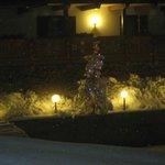 albero di natale di notte