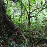 Tropical Rain Forest of Pico Bonito