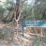 Walking track signage