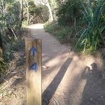 Walk track #4