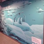 Polar bears display