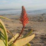 Flora down by aldinga beach reef