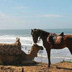 верблюдик и лошадка