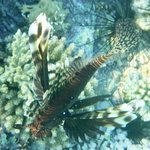 Lionfish just down from the hotel