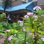 hotel discovery inn,,,,green garden