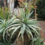 les beau cactus de partout