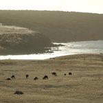 Känguruhs im Gegenlicht