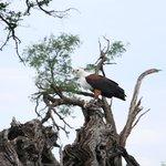 Una de las muchas aves que vereis por la zona
