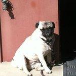 Gladys--a winery dog
