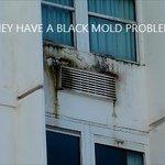 Mold on Windows