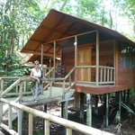 Lodge nella foresta