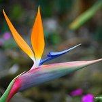 Tropical Flowers Everywhere