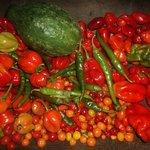 Gamela com pimentas nativas