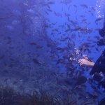 Remezzo reef Caldera