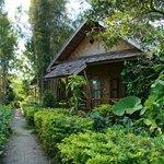 The bungalows among the lush garden