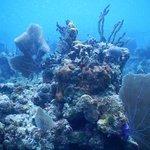 Snorkeling at reef