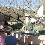barn owl talk