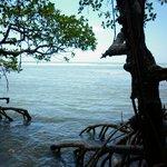 El mar desde el manglar