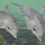 dolphins in the nursery