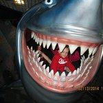 Eaten by a Shark!  Yikes!