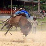 Breaking Horses