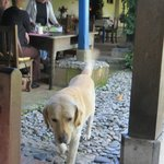 One of the friendly Hacienda dogs