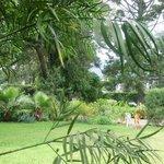 Guest annex garden
