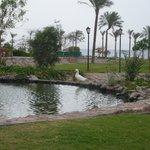 Photo of Movenpick Resort Taba Hotel