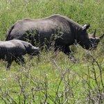 Mother & baby rhino