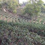 OCT - Tea Valley