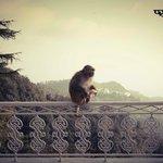 Monkey VS Orange