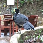 Costa Rica Bird