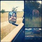 Photofrom my instagram more @SteveSiegel