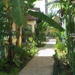 Lush pathway to our room