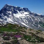 Blumenpracht vor dem Wildstrubel auf dem Grat zwischen Grosslohner und Chindbettihorn